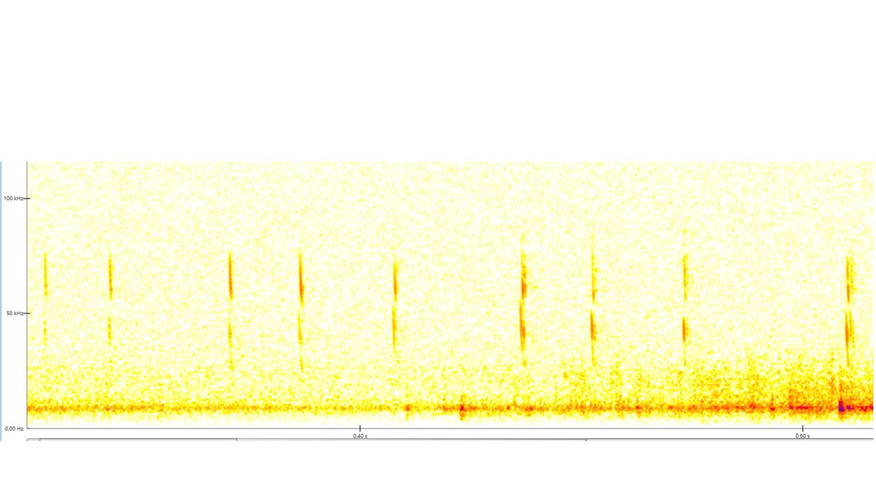 Bat Sound Diagrams